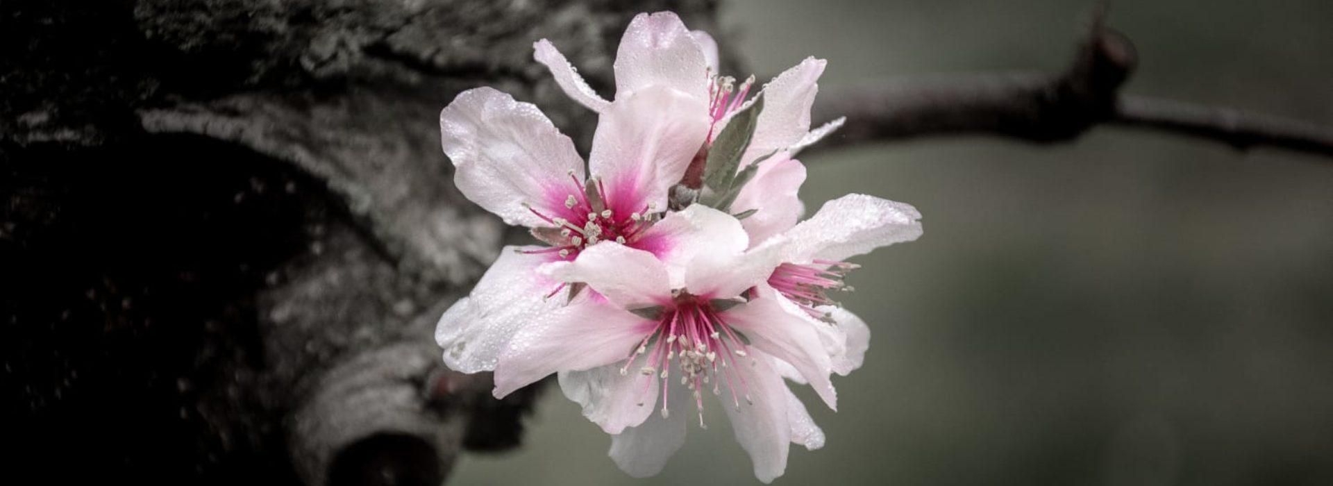 Floral Energy 4 U